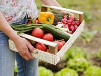 Woman holding crate of freshly picked vegetables in garden 22199053970| 写真素材・ストックフォト・画像・イラスト素材|アマナイメージズ