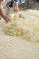 Cheese-making: curds and whey in a large container