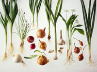 Various types of onions against white background