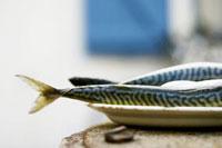 Fresh mackerel on plate