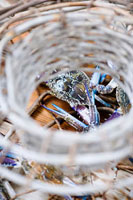 Fresh crabs in a basket