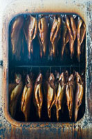 Salmon trout in smoking oven