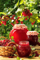 Jam in various jars under redcurrant bush