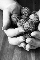 Hands full of lychees 22199057075| 写真素材・ストックフォト・画像・イラスト素材|アマナイメージズ