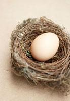 Hen's egg in bird's nest