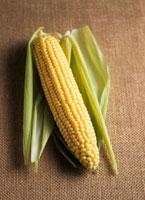 Corn on the cob with husks 22199059208| 写真素材・ストックフォト・画像・イラスト素材|アマナイメージズ