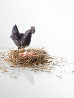 Straw nest with eggs and a chicken ornament