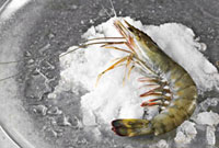 Fresh prawn on ice