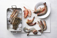 Still life with various types of prawns
