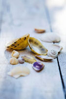 Sea shells on wooden table