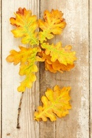 Autumnal oak leaves on a wooden surface
