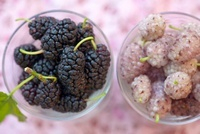 Blackberries and white blackberries in bowls (see from above