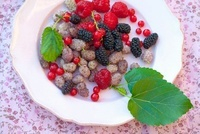 Various fresh berries on a plate