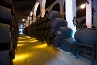The wine cellar at Bodega Terry in Jerez de la Frontera, Spa