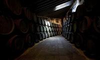 The wine cellar in Bodega Terry in Jerez de la Frontera, Spa
