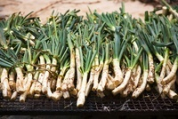 Spring onions being grilled (Spain)