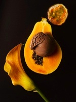 Half a papaya with chocolate ice cream