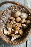 Basket of Assorted Wild Mushrooms; From Above