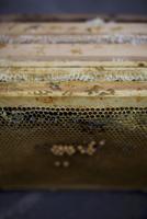 A honeycomb 22199074617| 写真素材・ストックフォト・画像・イラスト素材|アマナイメージズ