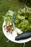 Radishes, spring onions, lettuce, zucchini on a table in the