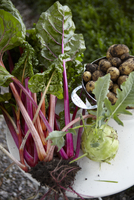 Red chard, potatoes and kohlrabi on a garden table