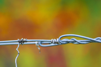 Tendrils on trellis wire (close up)