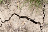 Dried earth in a vineyard