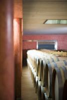 Barrique cellar at J. Heinrich winery, Deutschkreutz (Burgen