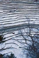 The highest vineyard in Europe in winter (Vispertal, Switzer