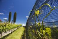 Tenuta Montalbano, Stabio, the region of most popular wine i
