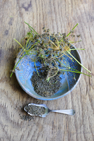 Parsley seeds in a bowl and on a spoon
