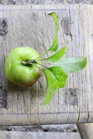 A Winterbanana apple with leaves