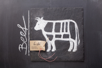 A sketch of a cow depicting cuts of meat with a label and th
