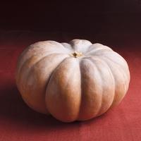 A whole pumpkin