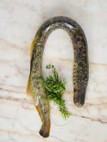 A lamprey and a bunch of herbs