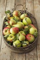 Apples and pears on a tray 22199075799| 写真素材・ストックフォト・画像・イラスト素材|アマナイメージズ