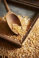 Khorasan Wheat with a Wooden Spoon