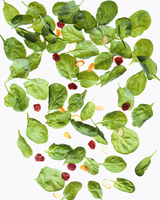 Spinach leaves and cranberries, lit from behind 22199076823| 写真素材・ストックフォト・画像・イラスト素材|アマナイメージズ