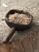 Spelt grains in a rustic wooden scoop