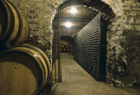 Barrels and bottles of wine in a wine vault