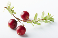 Cranberries on the stalk against a white background