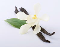 Two vanilla pods and one vanilla flower