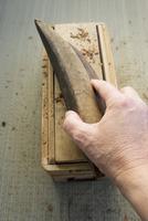 Bonito being shaved 22199078438| 写真素材・ストックフォト・画像・イラスト素材|アマナイメージズ