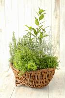 Assorted herb plants in a wicker basket 22199079143  写真素材・ストックフォト・画像・イラスト素材 アマナイメージズ