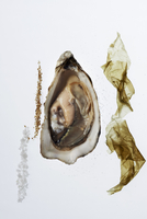 Fresh oyster with seaweed, salt and pepper