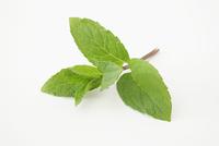 Fresh peppermint 22199080692| 写真素材・ストックフォト・画像・イラスト素材|アマナイメージズ