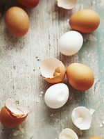 Fresh Eggs and Egg Shells