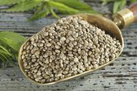 Hemp seeds on a scoop