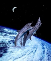 Dolphins leaping from a hurricane on earth. Conceptual compo