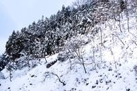 Jigokudani National Park, Japan